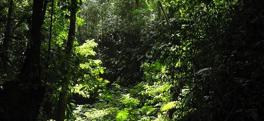 Dschungel:fexphoto